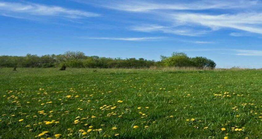 Приватизация земли: как приватизировать земельный участок